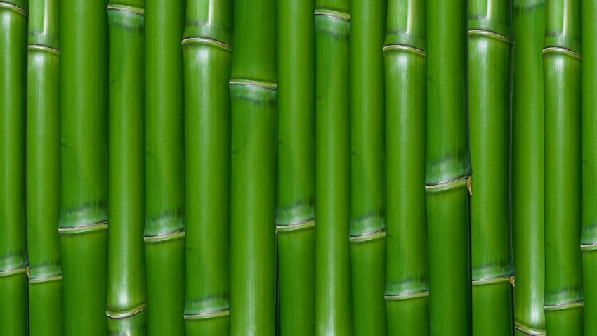 Bamboo Green Background High Resolution Download