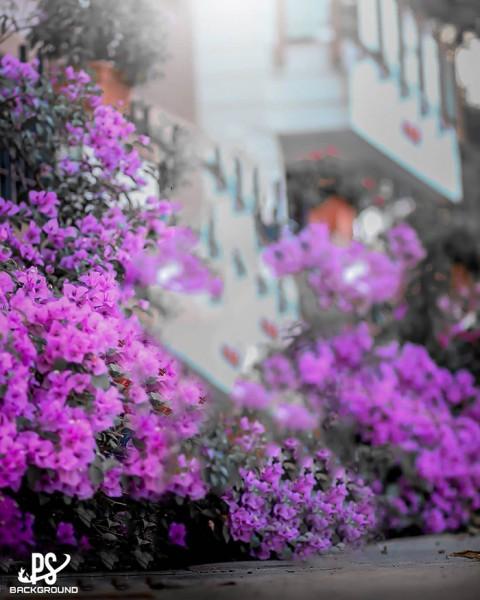 Beautiful Flower CB Background Full Hd