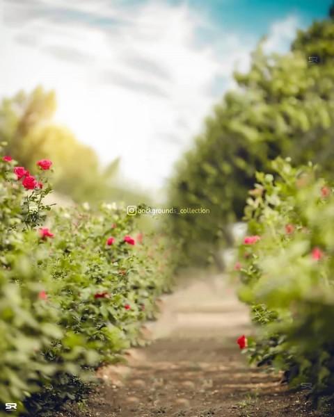 Beautiful PicsArt Editing Background Full HD Download