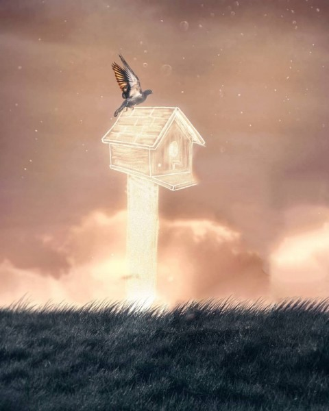 Bird Picsart Background Download Full Hd