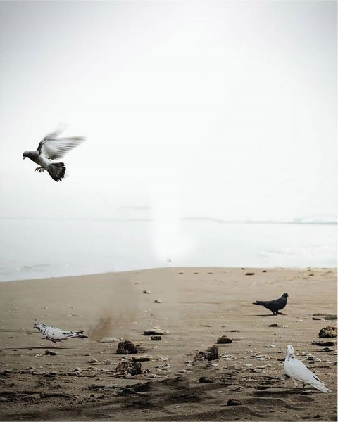 Birds Snapseed Background Full Hd