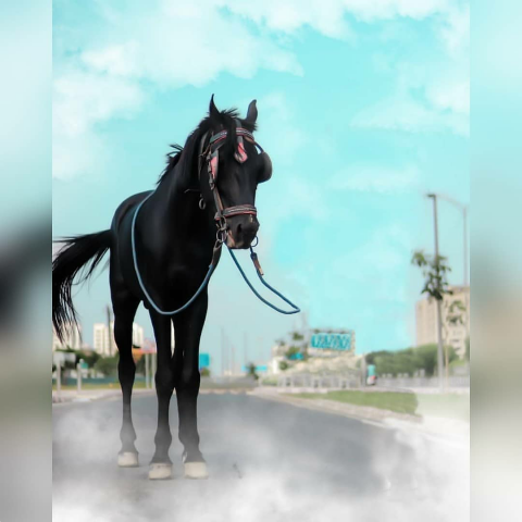 Black Horse Editing CB Background