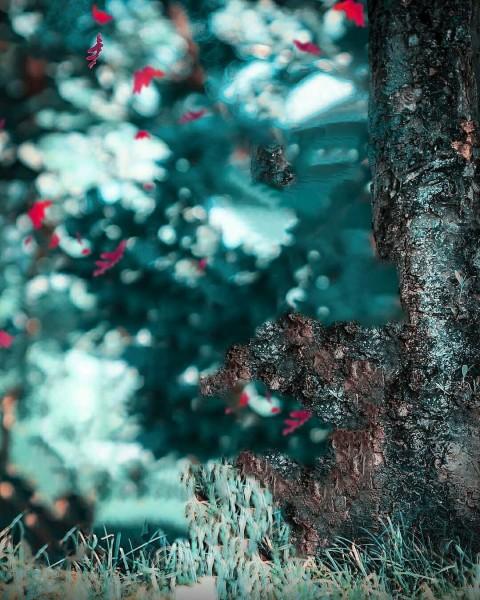 Blur Tree CB PicArt Background HD Background