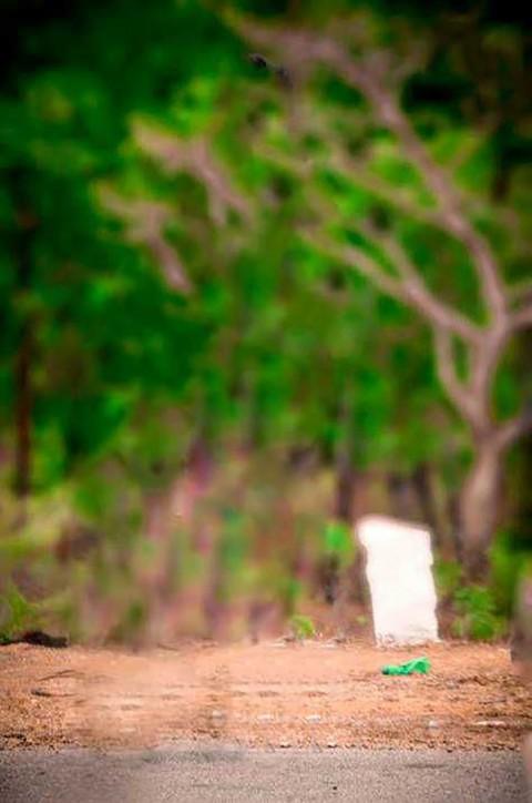 Blur Tree Outdoor CB Background HD