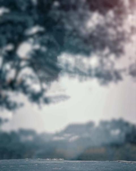 Blur Tree Photo Editing HD Background Download (2)