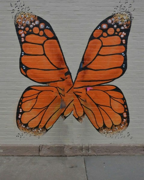 Butterfly PicsArt Editing Background Download Full HD