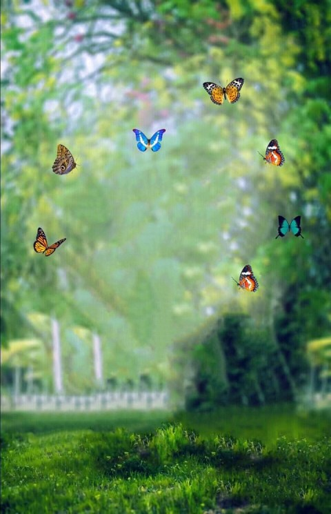 Butterfly PicsArt Editing CB Background