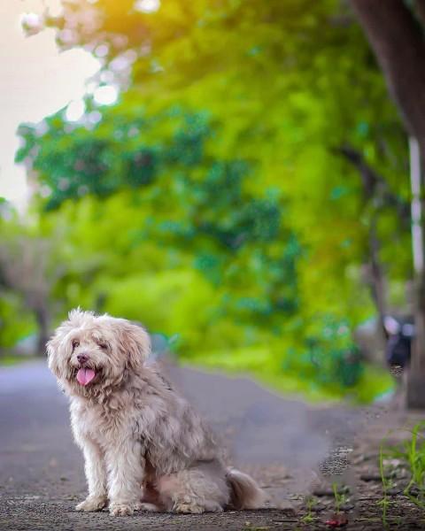 CB Background Puppy Editing
