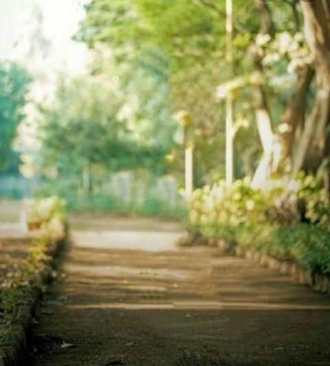 CB Nature Photo Editing Background HD