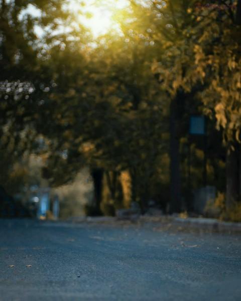 CB Tree Road Photo Editing Background HD
