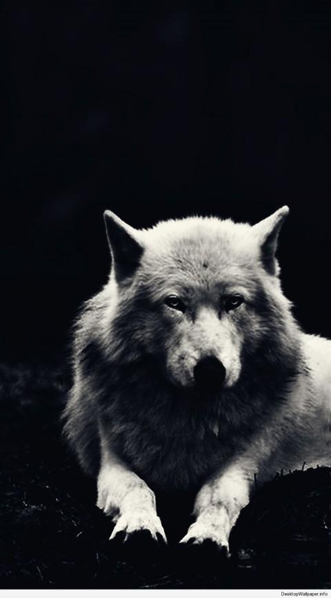 Dark Wolf Background Full HD Wallpaper Download