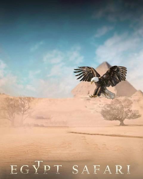 Eagle Birds CB PicArt Background HD Background