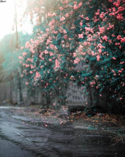 Flower Tree On Road Picsart Background