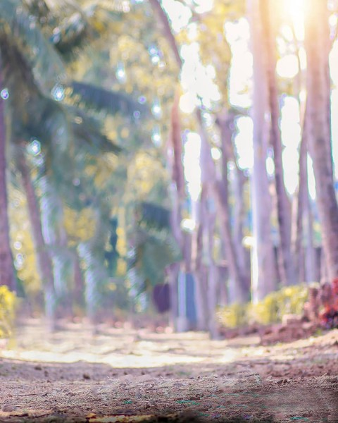 Forest CB Background Download