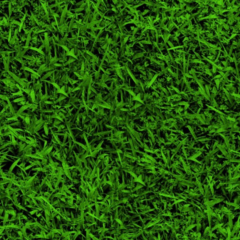 Grass HQ Background Images Photos Download