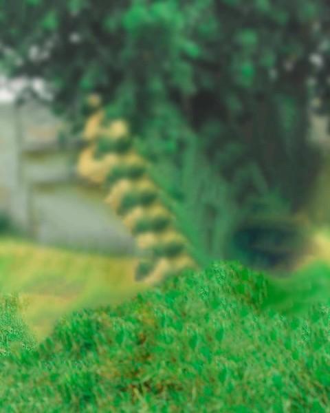 Green Grass PicArt Background HD Background
