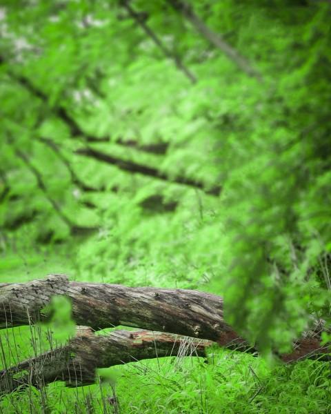 Green Tree CB Background Full Hd