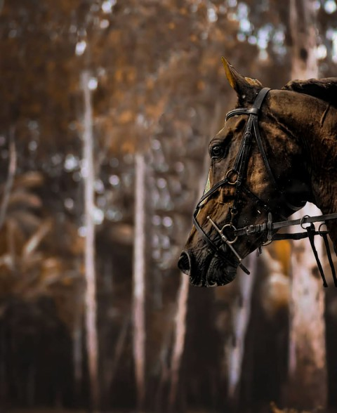 Horse CB Background Download