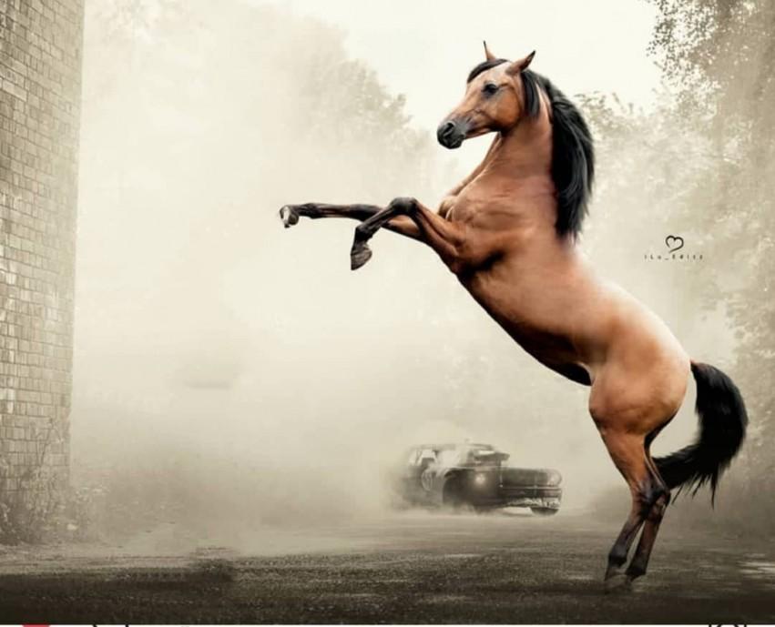 Horse CB Background Full HD