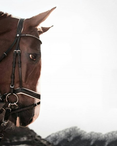Horse Face Editing PicArt Background HD Background