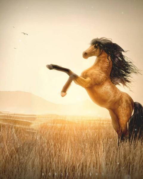 Horse Picsart Background Full Hd