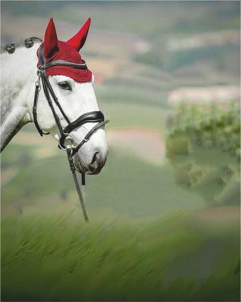 Horse PicsArt Photo Editing Background Full hd
