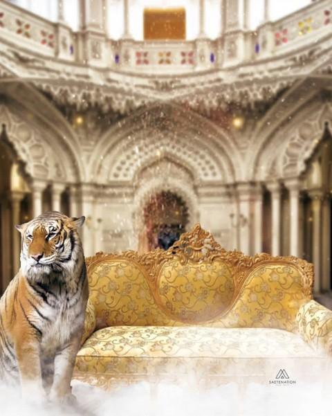 King Raj Gaddi Picsart Background With Tiger