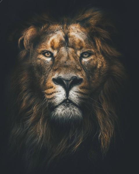 Lion CB Editing Background