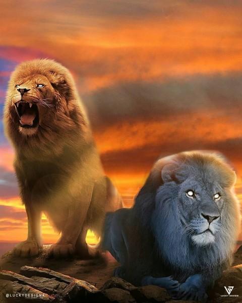 Lion CB Editing Full Hd Background