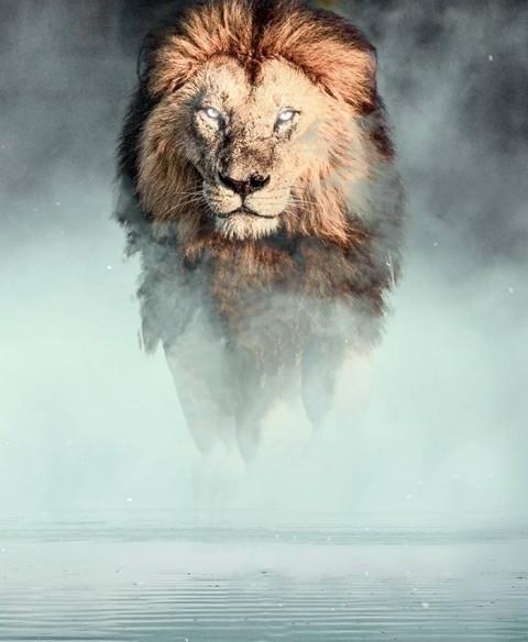 Lion New Editing CB Background