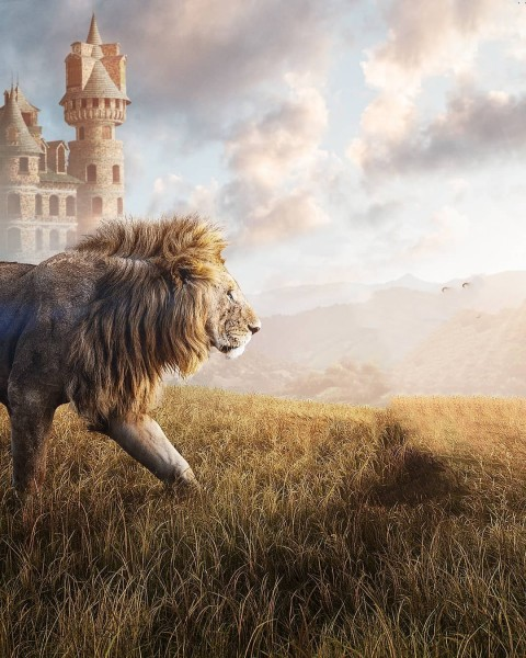 Lion Photo Editing HD Background Download