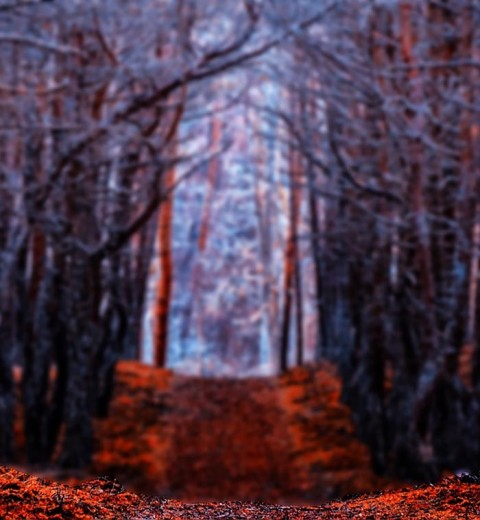 Nature Forest CB Background Download
