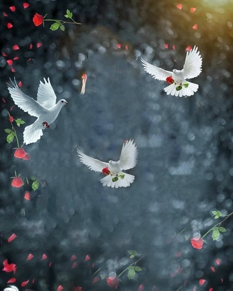 Parrot Bird Photo Editing HD Background Download