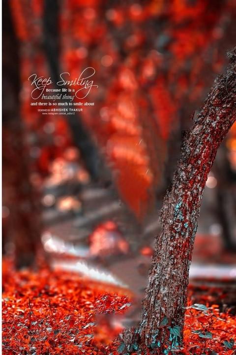 PicsArt CB Tree Photo Editing Background