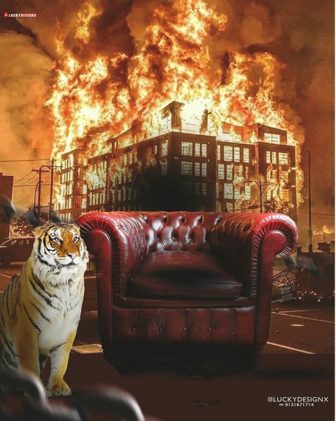 Picsart Chair With Tiger Photo Editing Background