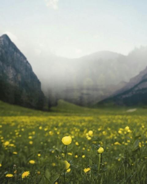 PicsArt Nature Editing Background HD Download