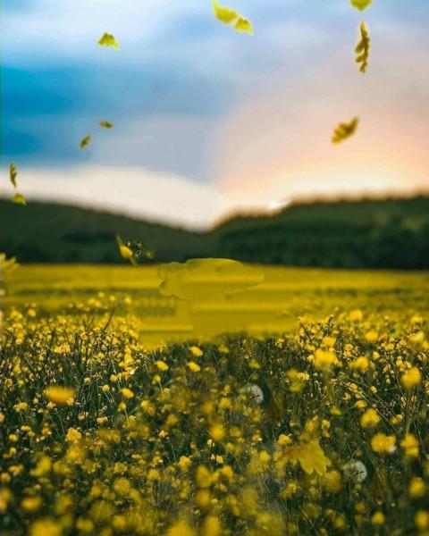 PicsArt Nature Flower Photo Editing Background