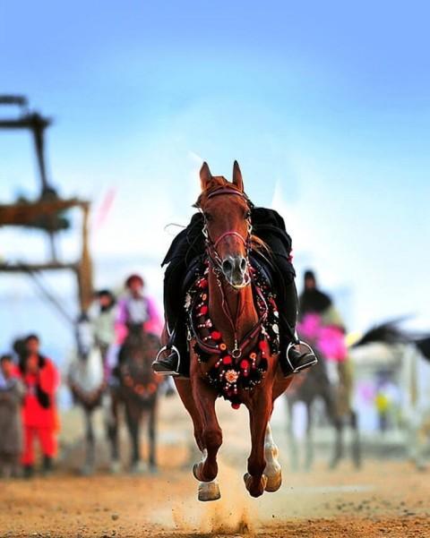 Running Horse PicsArt CB Editing HD Background