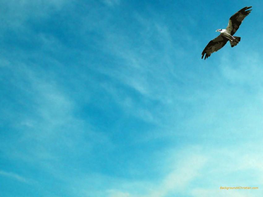 Sky With Bird Powerpoint Background