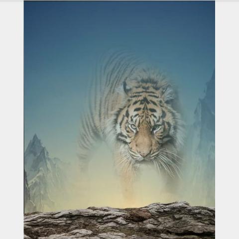Tiger Editing CB Background