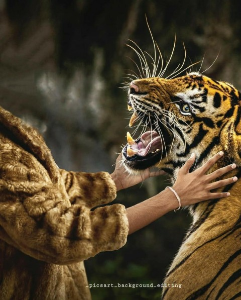 Tiger New Editing Picsart Background