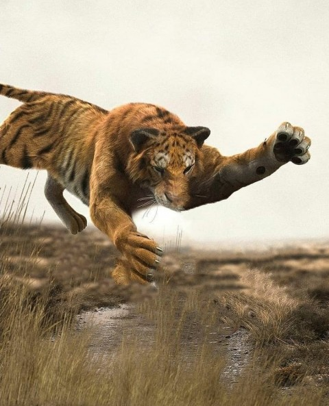 Tiger Photo Editing HD Background Download