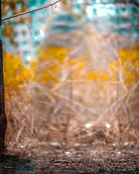 Tree Blur New CB Background HD