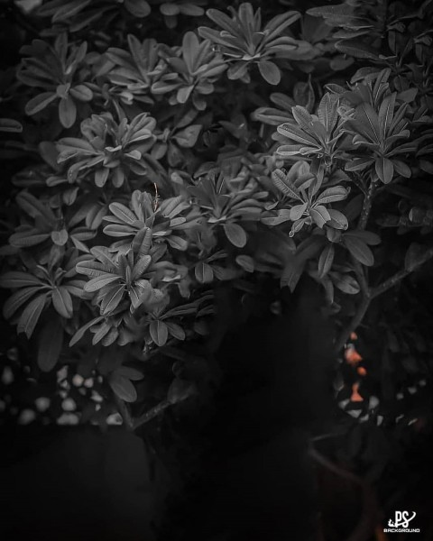 Tree Editing Picsart Background Download