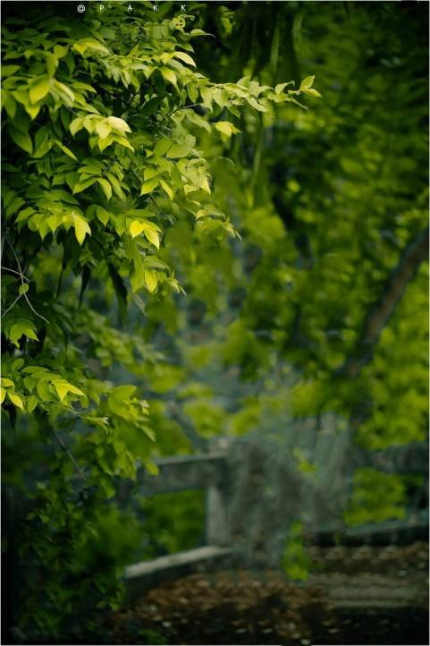 Tree Picsart CB Background Download Hd