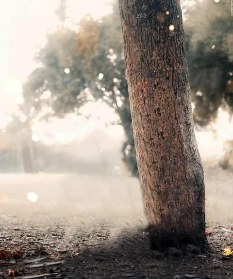Tree PicsArt Editing Background Full HD Download