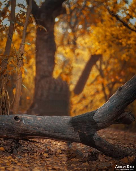 Tree PicsArt Photo Editing Background