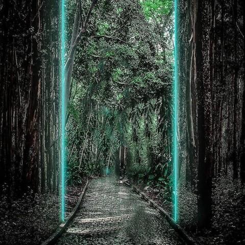 Tree Snapseed Background Full Hd