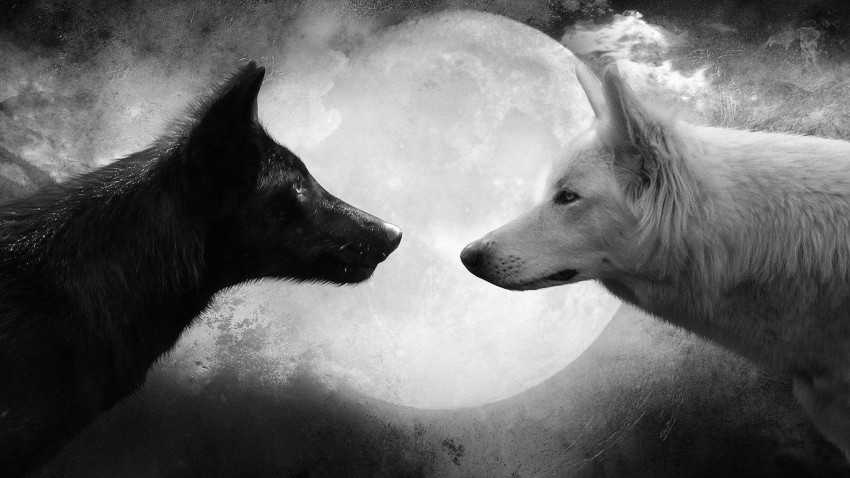Two Wolf Moon Background Full HD Wallpaper Download