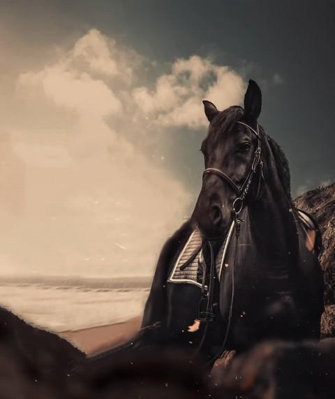 Vijay Mahar Horse Editing Background